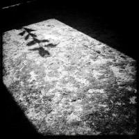 Ombre d'une fleur sur un sol en béton recouvert de mousse en noir et blanc avec hipstamatic